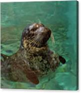 Aquarium Seal  Canvas Print