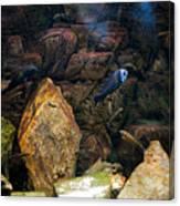 Aquarium Stones Arrangement Canvas Print