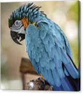 Ara Parrot Canvas Print