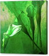 Arabella Canvas Print