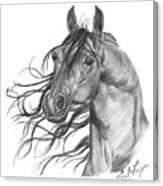 Arabian Head Canvas Print