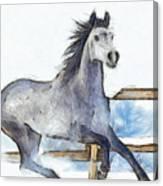 Arabian Horse And Snow - Pa Canvas Print