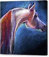 Arabian Horse Equine Painting Canvas Print