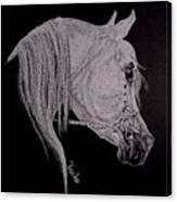 arabian horse XI Canvas Print