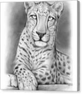Arabian Leopard Canvas Print