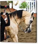 Arabian Show Horse 5 Canvas Print