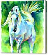 Arabian Stallion Canvas Print