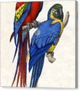 Aracangua And Blue And Yellow Macaw Canvas Print