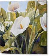 Aram Lillies Canvas Print