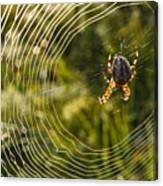 Araneus Morning Canvas Print