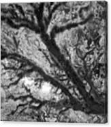 Arboreal Plateau 1 Canvas Print