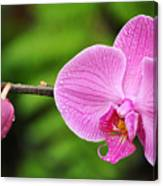 Arboretum Tropical House Orchid Canvas Print