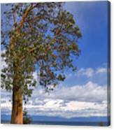 Arbutus Tree At Rathtrevor Beach British Columbia Canvas Print