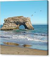Arch In The Sea With Pelicans Flying By, At Natural Bridges State Beach, Santa Cruz, California Canvas Print