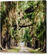Arch Of Oaks - Evergreen Plantation Canvas Print