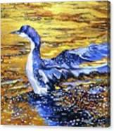 Arctic Loon On Golden Pond Canvas Print
