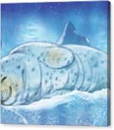 Arctic Seal Canvas Print
