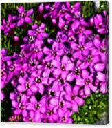 Arctic Wild Flowers Canvas Print