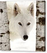 Arctic Wolf Seen Between Two Trees In Winter Canvas Print