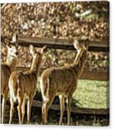 Are You Looking At Us Canvas Print