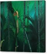Areca Plam Canvas Print