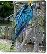 Arent I A Handsome Fellow - Blue And Gold Macaw Canvas Print