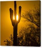 Arizona Cactus #1 Canvas Print