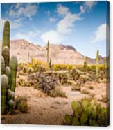 Arizona Desert #3 Canvas Print