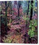 Arkansas Autumn Canvas Print