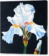 Arlene's Iris Canvas Print