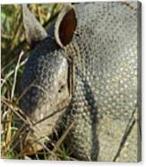 Armadillo By Morning Canvas Print