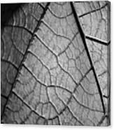 Aroid House Leaf Canvas Print