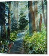 Around The Path Canvas Print
