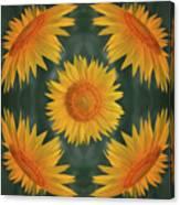 Around The Sunflower Canvas Print