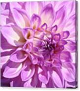 Art Prints Dahlia Flower Decorative Art Garden Baslee Canvas Print