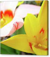 Art Prints Pink Tulip Yellow Tulips Giclee Prints Baslee Troutman Canvas Print