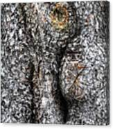 Art Within A Tree Canvas Print