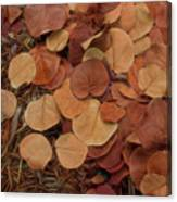 Artfully Scattered Sea Grape Leaves Canvas Print
