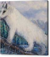Artic Fox Canvas Print