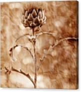 Artichoke Bloom Canvas Print
