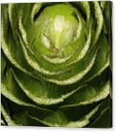 Artichoke Close-up Canvas Print
