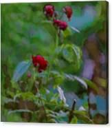 Artistic Last Rose Canvas Print