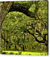 Artistic Live Oaks Canvas Print