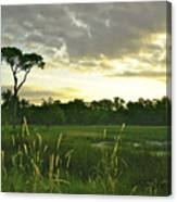 Artistic Lush Marsh Canvas Print