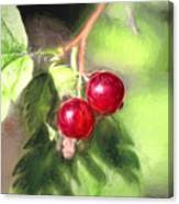 Artistic Panterly Two Wild Goosberries Canvas Print