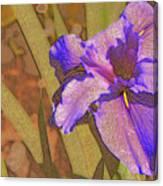 Artsy Iris Canvas Print