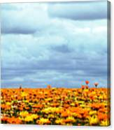 As Far As The Eye Can See Canvas Print