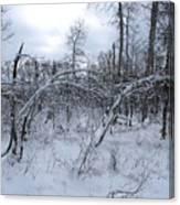 As Winter Returns Canvas Print