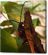 Asending Beetle Canvas Print