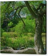 Ash Tree Canvas Print
